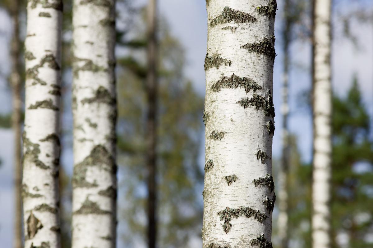 Nyligen invigdes den nya forskningsplattformen Treesearch