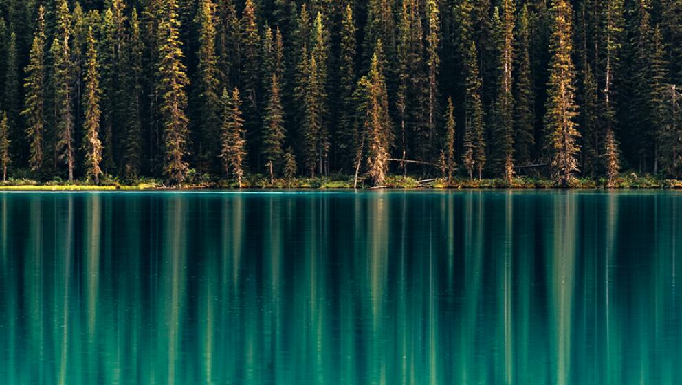 Grön skog och vatten