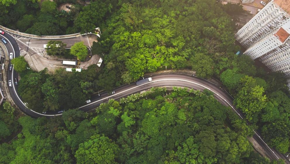 bilväg genom skog och hus